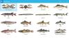 Скачать Рыбы России
